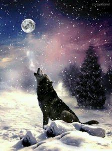 Luna Fria de Enero